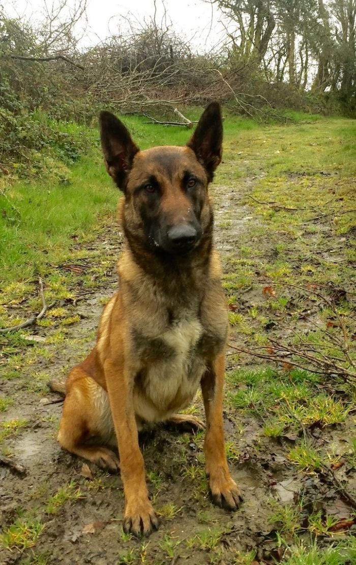 Moby, malinois, chien de travail